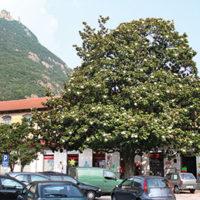 Sant'Ambrogio – Panassi Librerie